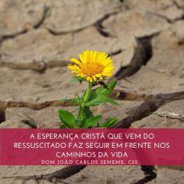 A ESPERANÇA CRISTÃ QUE VEM DO RESSUSCITADO FAZ SEGUIR EM FRENTE NOS CAMINHOS DA VIDA